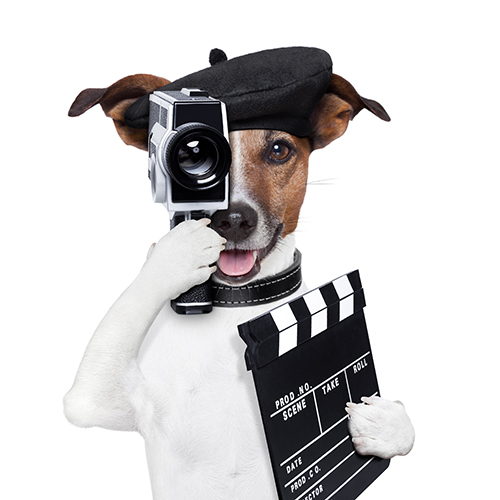 Video Marketing with humor Dog Director