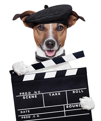 south florida video production company clapper dog